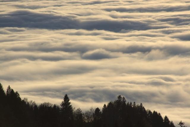 Herbstblick auf Nebelmeer (vom Pfänder)