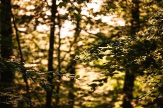 Blätter im Abendlicht
